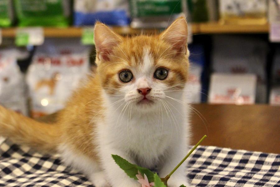 弘前 市 子猫 譲り ます